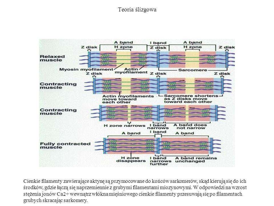 Teoria ślizgowa