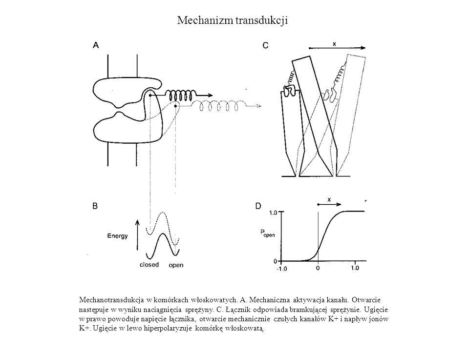 Mechanizm transdukcji