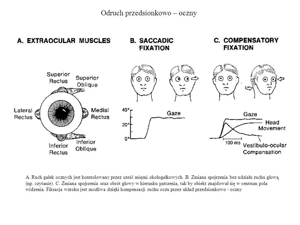 Odruch przedsionkowo – oczny