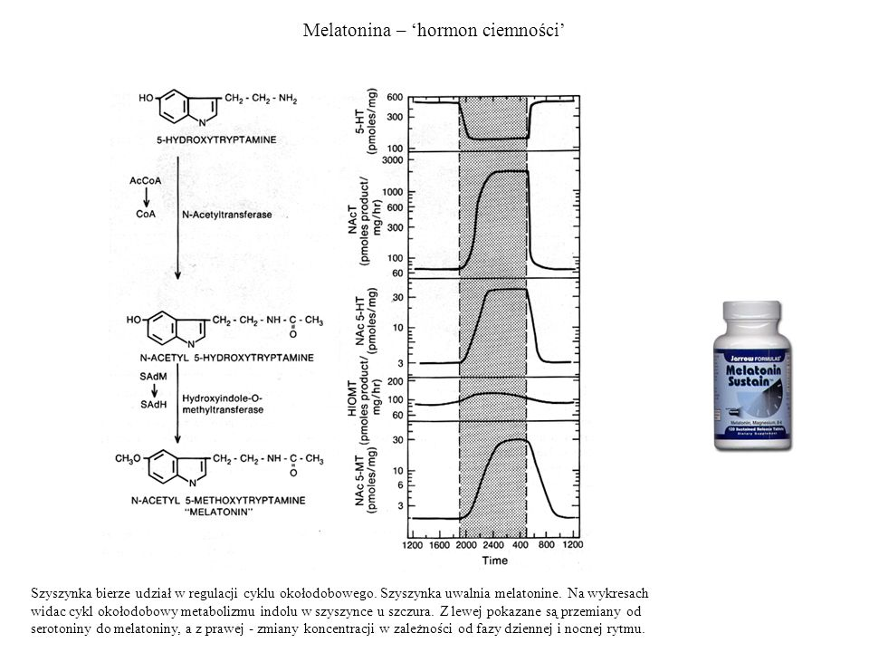 Melatonina – 'hormon ciemności'