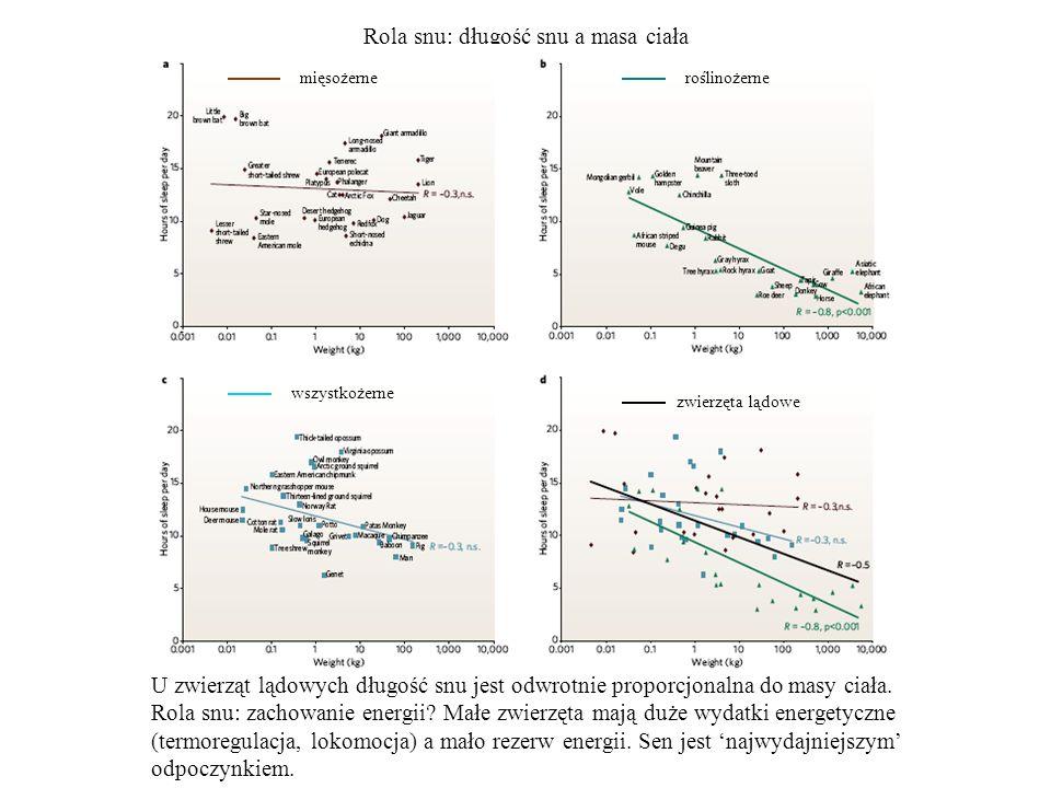 Rola snu: długość snu a masa ciała