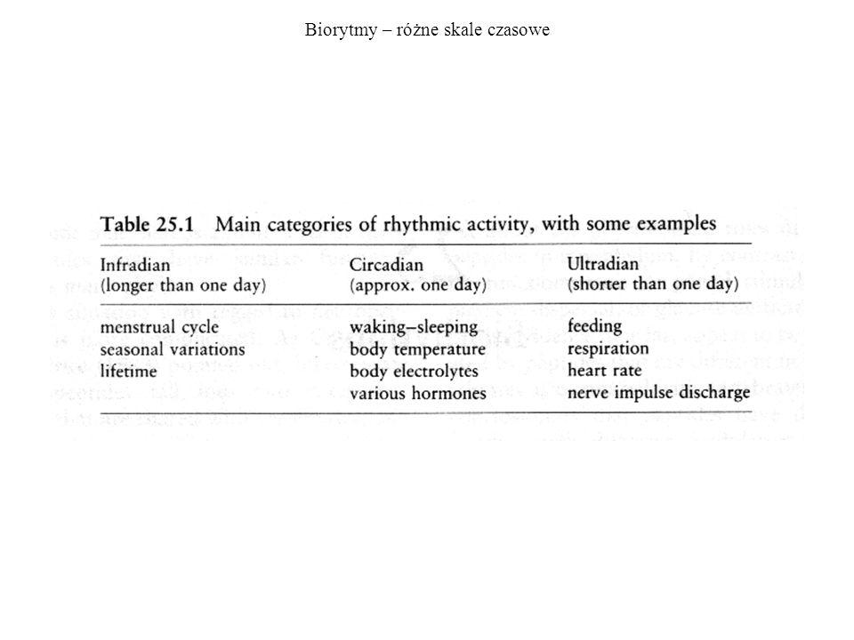 Biorytmy – różne skale czasowe