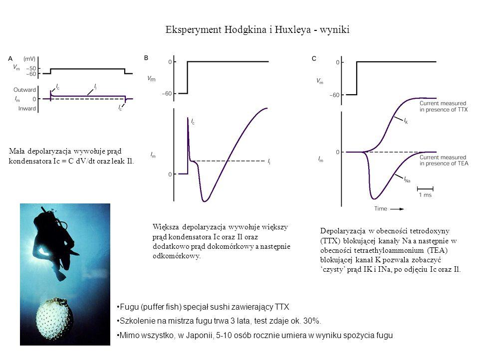 Eksperyment Hodgkina i Huxleya - wyniki