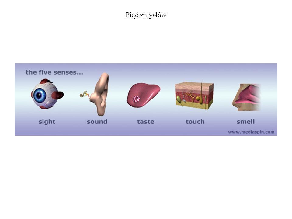 Pięć zmysłów
