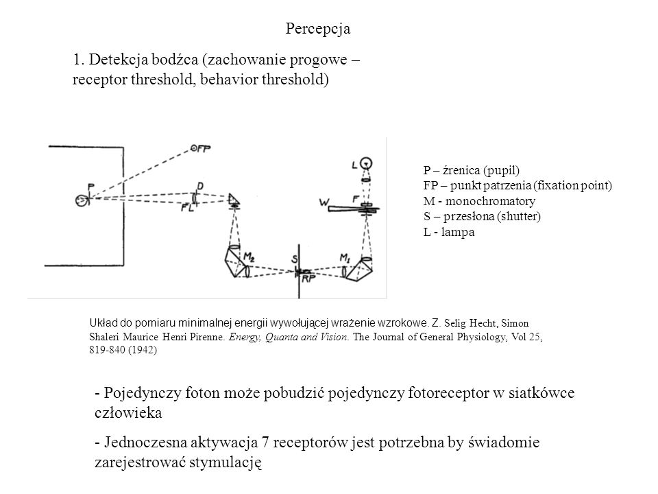 Percepcja 1. Detekcja bodźca (zachowanie progowe – receptor threshold, behavior threshold) P – źrenica (pupil)