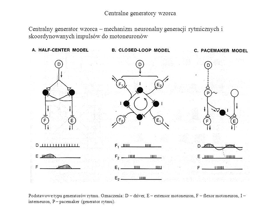Centralne generatory wzorca