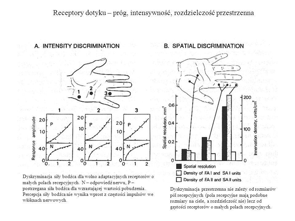 Receptory dotyku – próg, intensywność, rozdzielczość przestrzenna