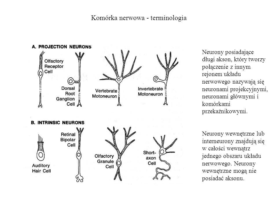 Komórka nerwowa - terminologia