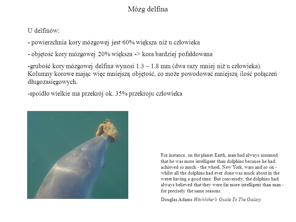 Mózg delfina U delfinów: