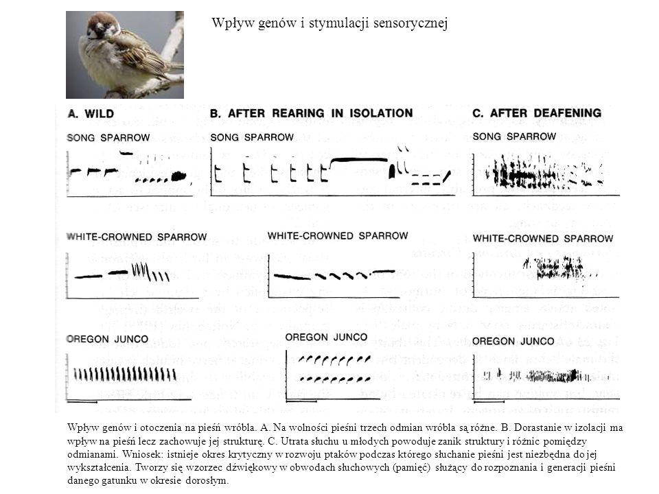 Wpływ genów i stymulacji sensorycznej