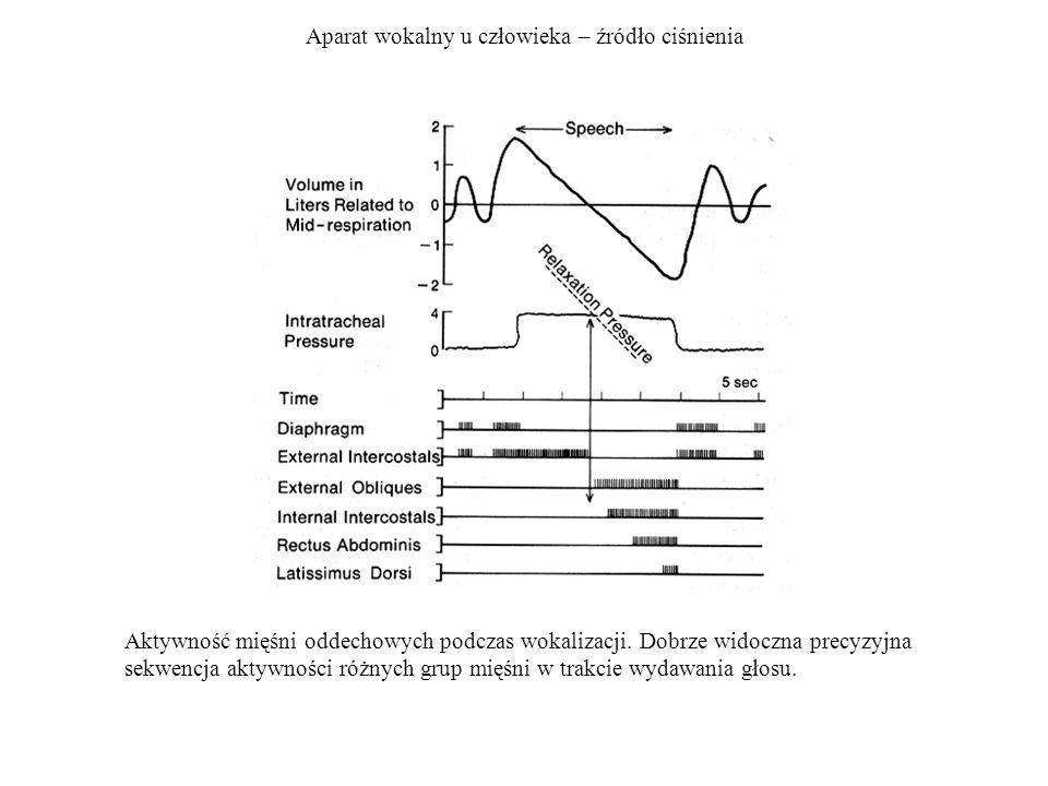 Aparat wokalny u człowieka – źródło ciśnienia