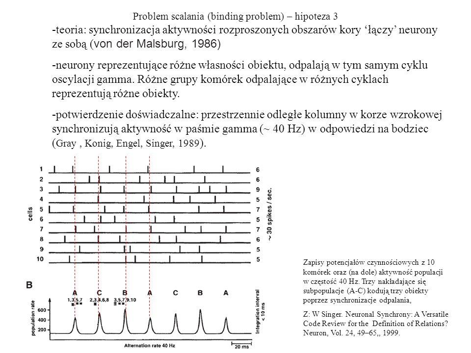 Problem scalania (binding problem) – hipoteza 3