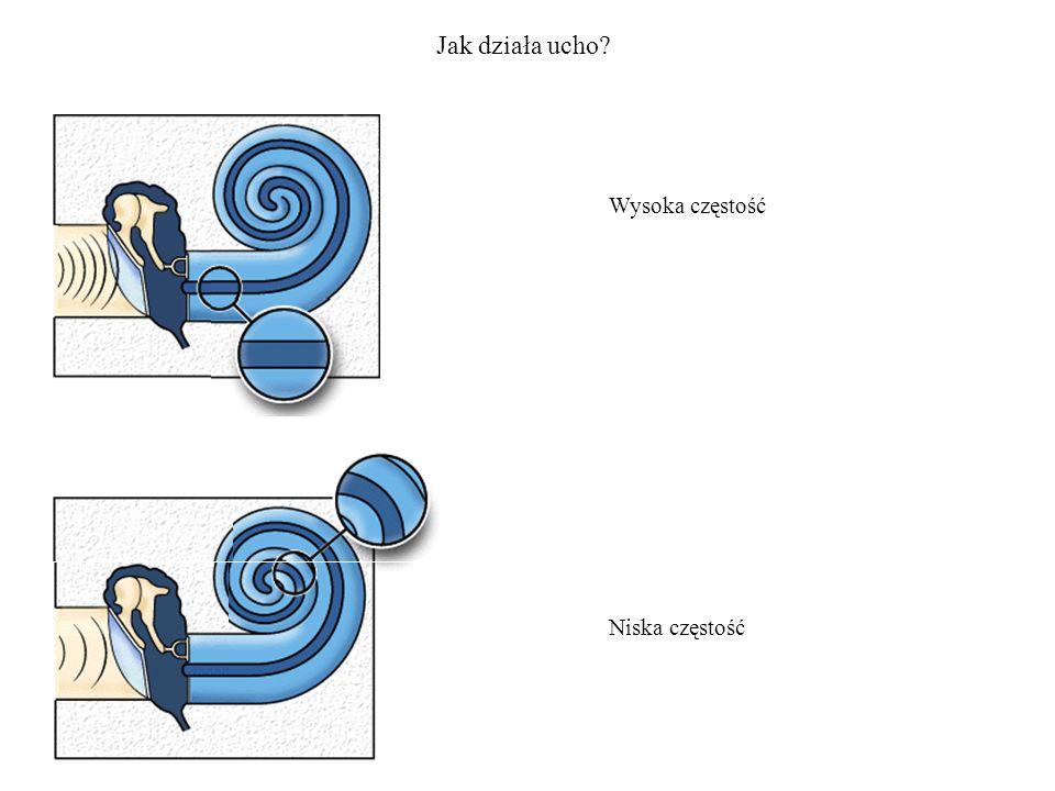 Jak działa ucho Wysoka częstość Niska częstość
