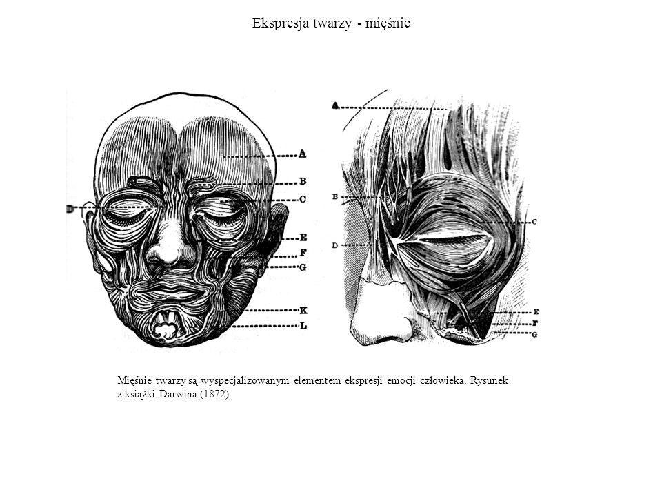 Ekspresja twarzy - mięśnie