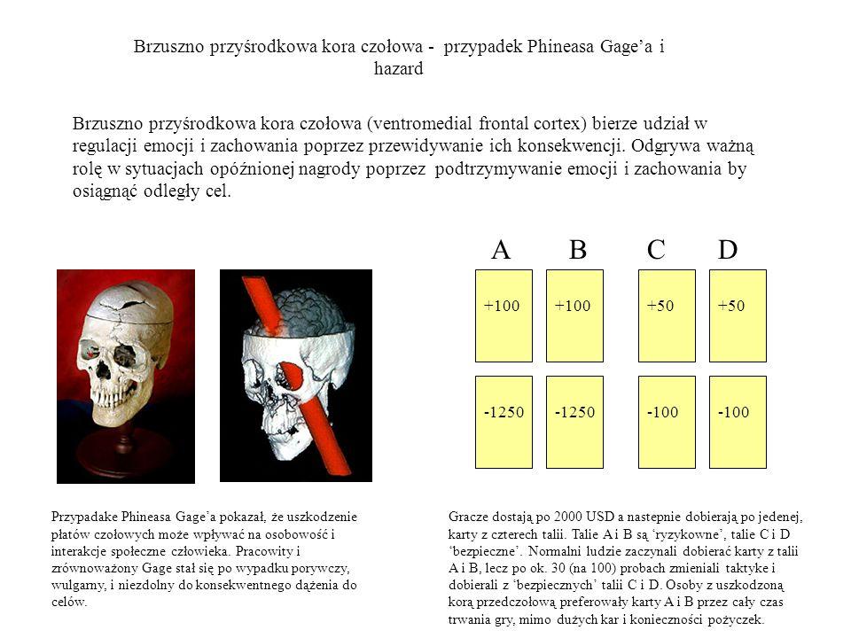 Brzuszno przyśrodkowa kora czołowa - przypadek Phineasa Gage'a i hazard