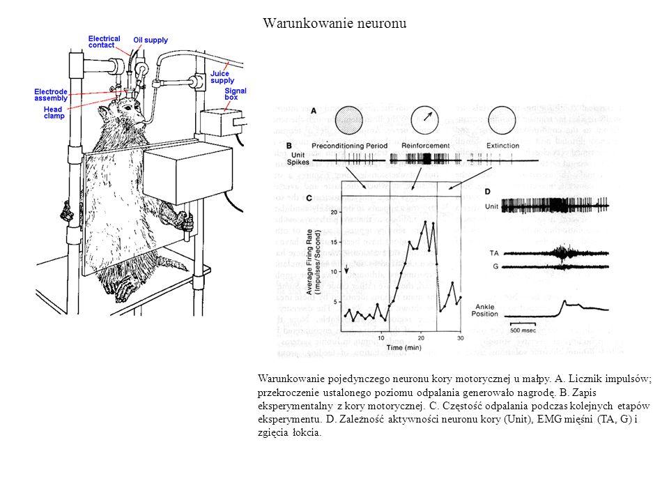 Warunkowanie neuronu