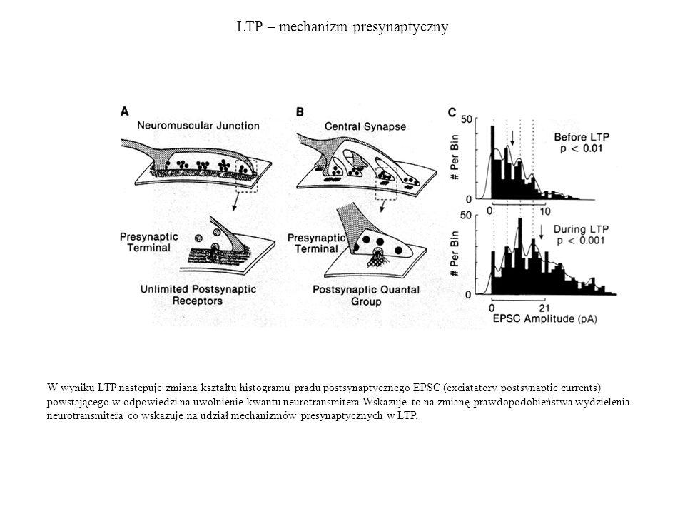 LTP – mechanizm presynaptyczny