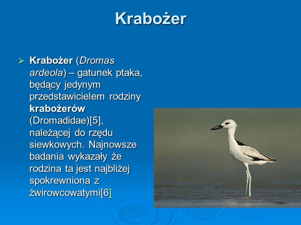 Krabożer