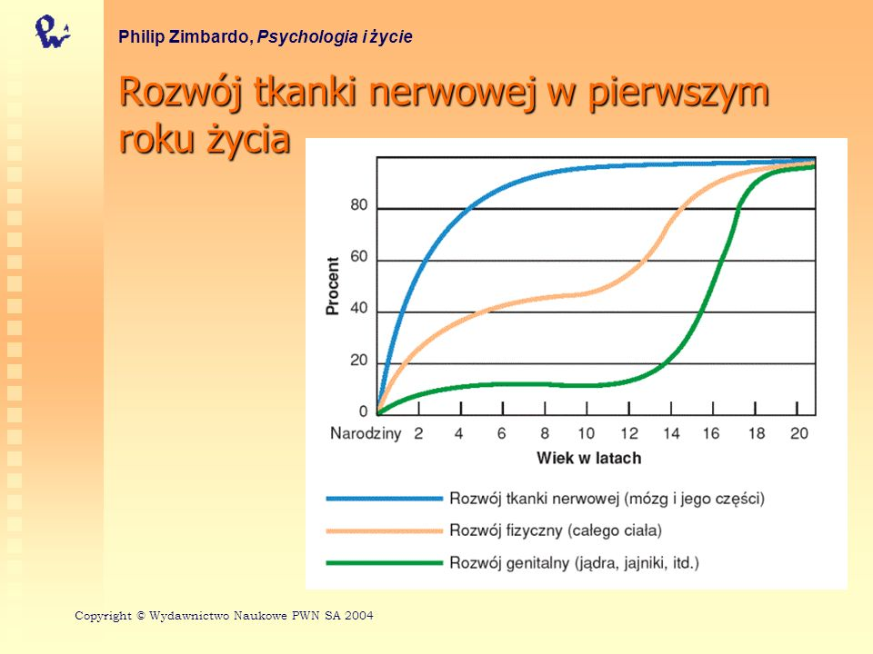 Rozwój tkanki nerwowej w pierwszym roku życia