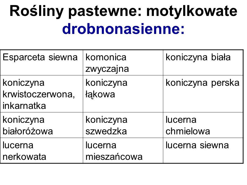 Rośliny pastewne: motylkowate drobnonasienne: