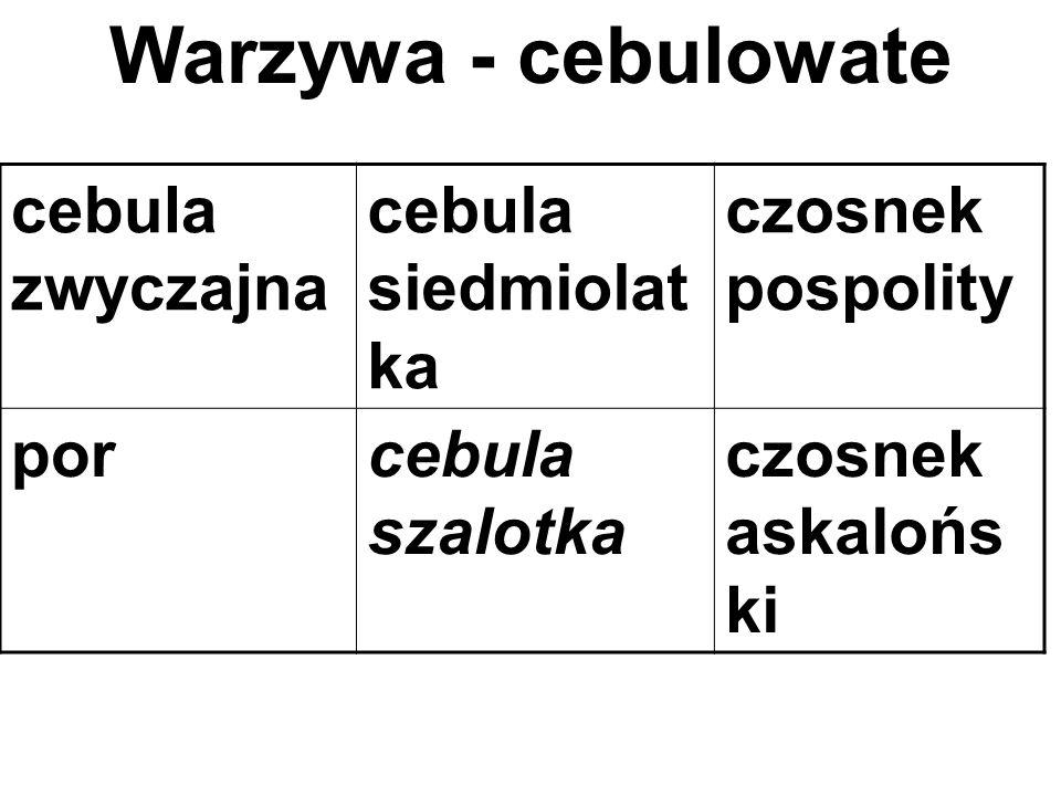Warzywa - cebulowate cebula zwyczajna cebula siedmiolatka