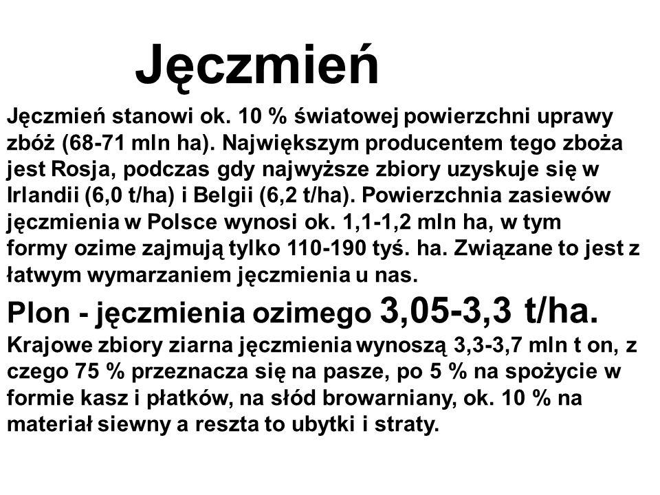 Jęczmień Plon - jęczmienia ozimego 3,05-3,3 t/ha.