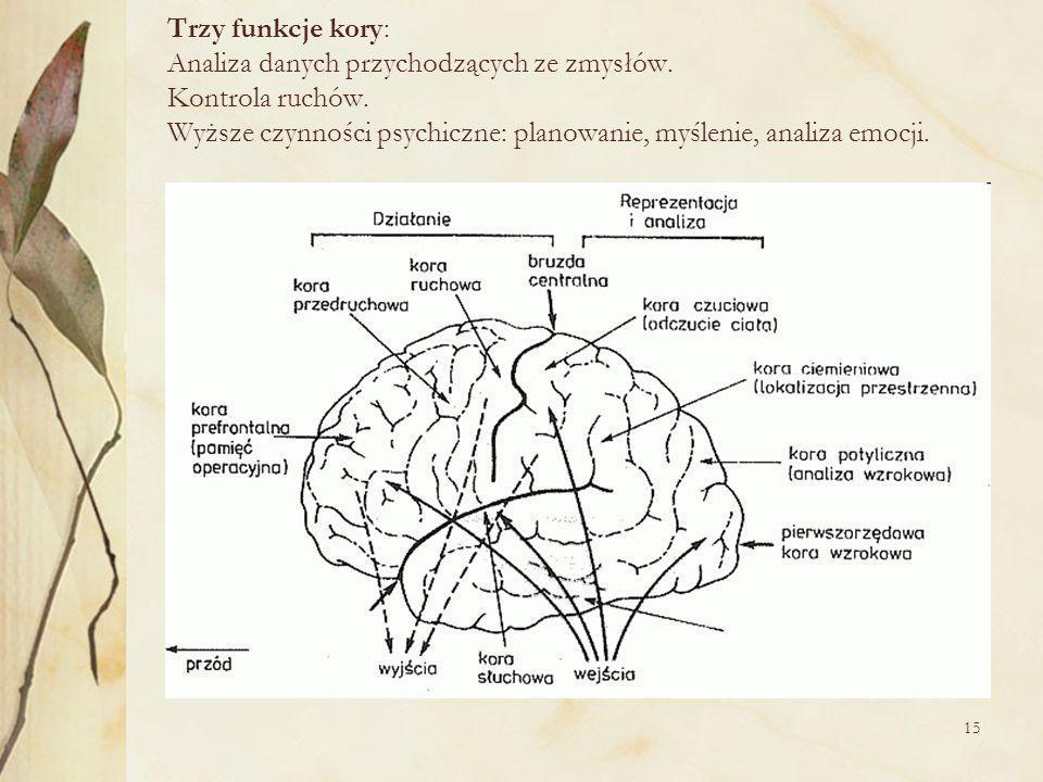 Trzy funkcje kory: Analiza danych przychodzących ze zmysłów