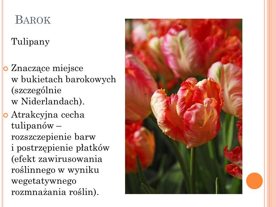 Barok Tulipany. Znaczące miejsce w bukietach barokowych (szczególnie w Niderlandach).