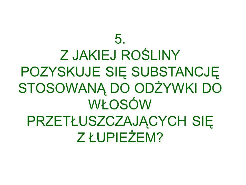 5. Z JAKIEJ ROŚLINY.