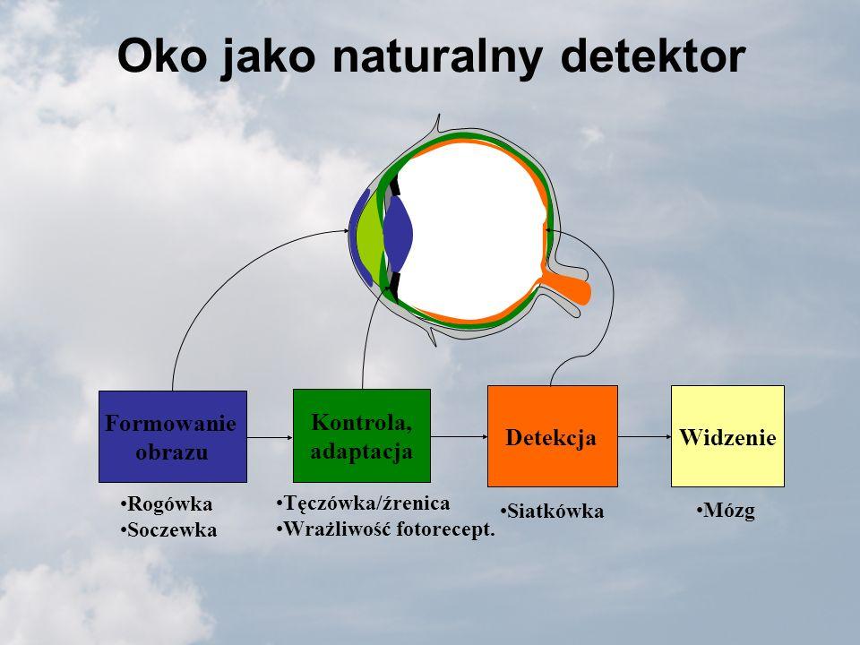 Oko jako naturalny detektor