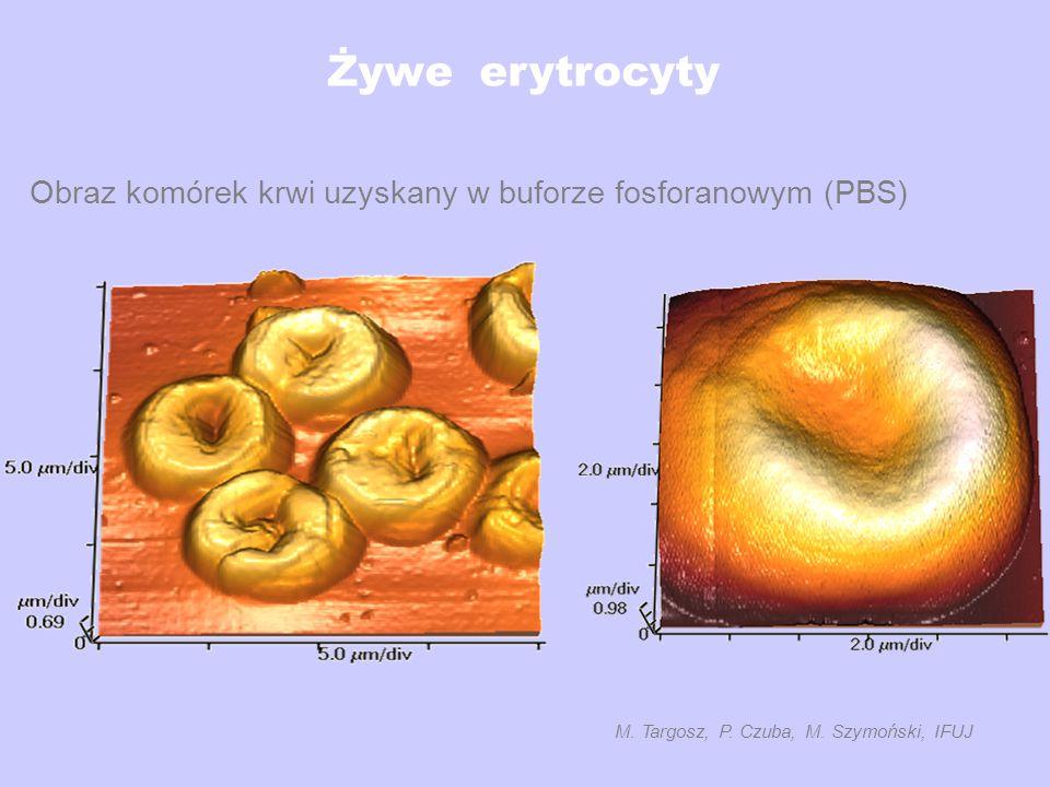 M. Targosz, P. Czuba, M. Szymoński, IFUJ
