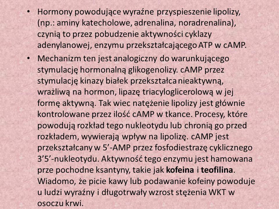 Hormony powodujące wyraźne przyspieszenie lipolizy, (np