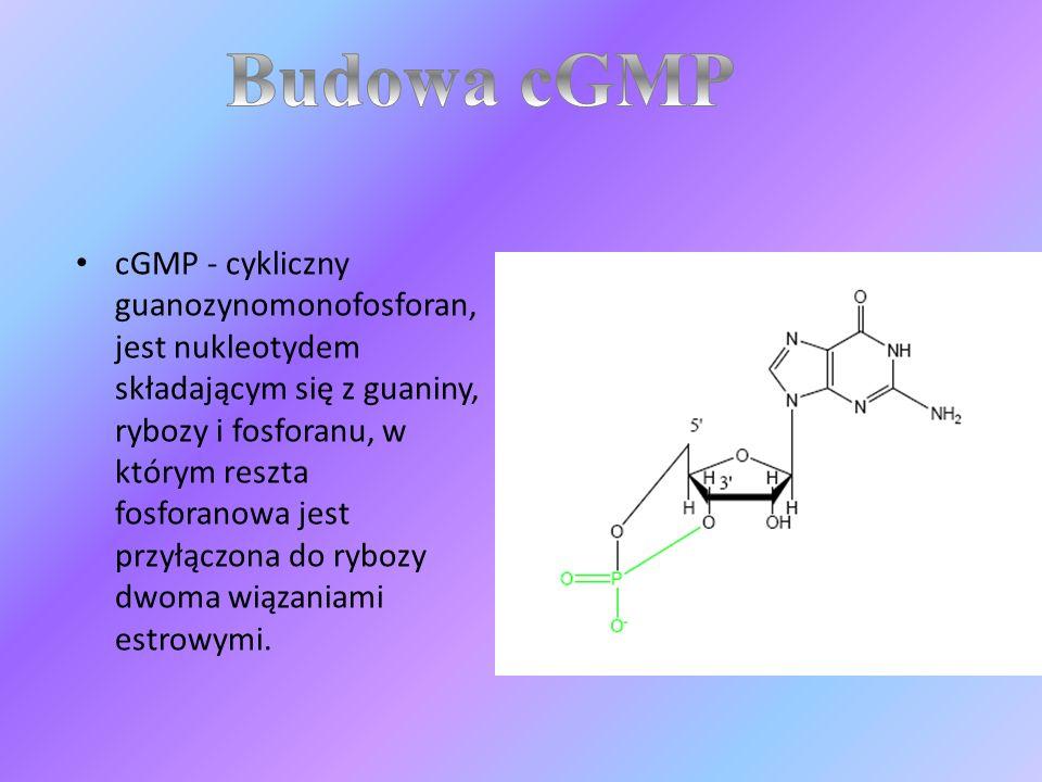 Budowa cGMP