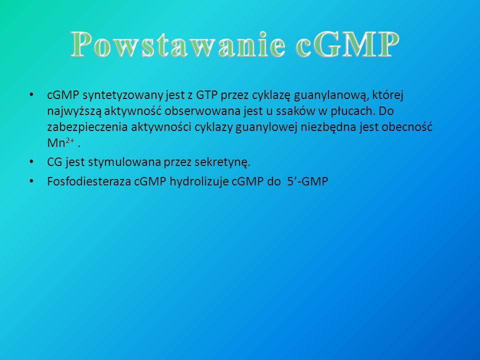 Powstawanie cGMP