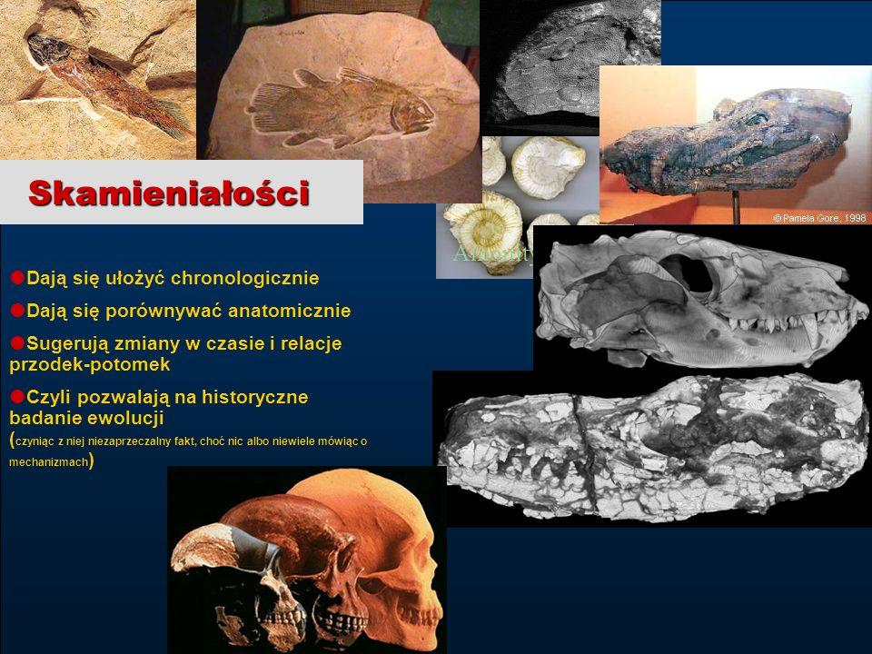 Skamieniałości Tricodont Amonity Dają się ułożyć chronologicznie