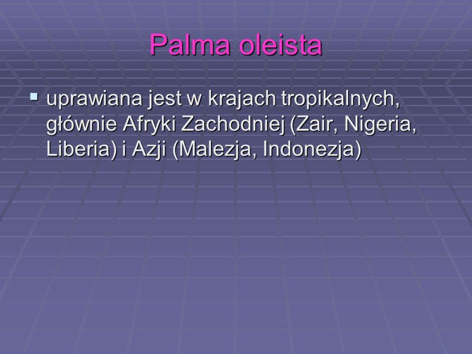 Palma oleista uprawiana jest w krajach tropikalnych, głównie Afryki Zachodniej (Zair, Nigeria, Liberia) i Azji (Malezja, Indonezja)