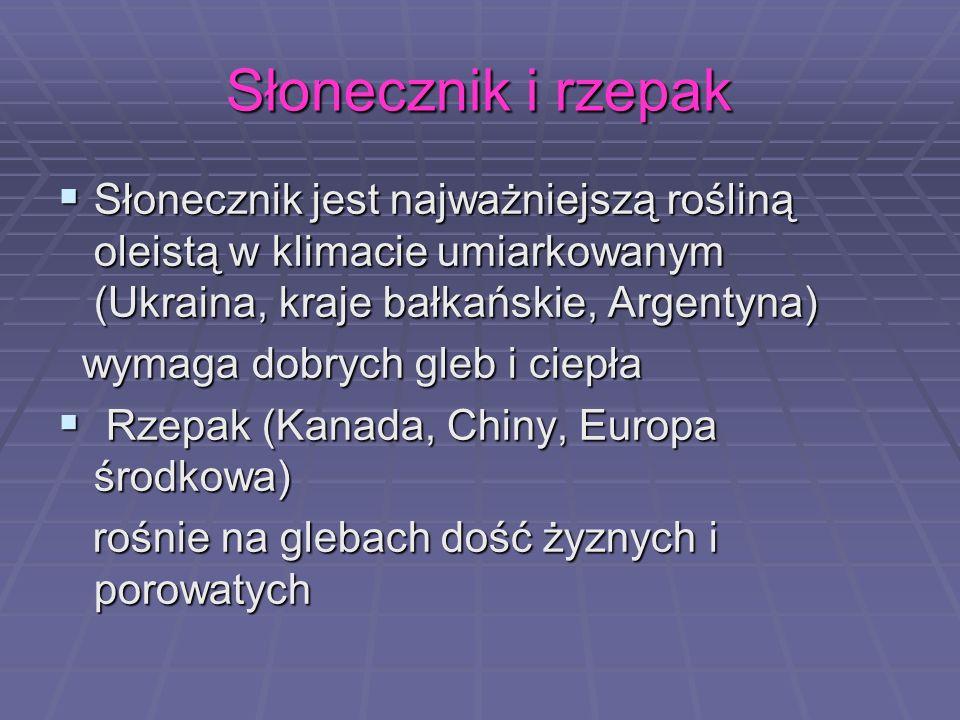 Słonecznik i rzepak Słonecznik jest najważniejszą rośliną oleistą w klimacie umiarkowanym (Ukraina, kraje bałkańskie, Argentyna)