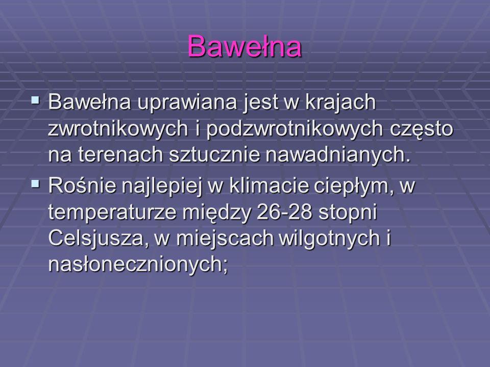 Bawełna Bawełna uprawiana jest w krajach zwrotnikowych i podzwrotnikowych często na terenach sztucznie nawadnianych.