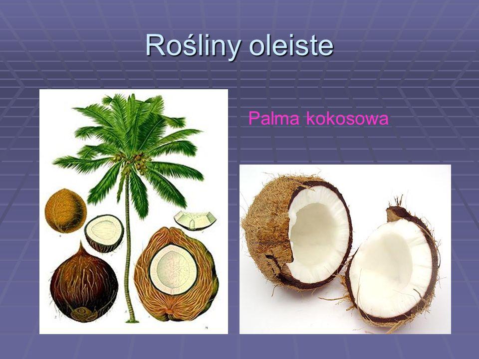 Rośliny oleiste Palma kokosowa