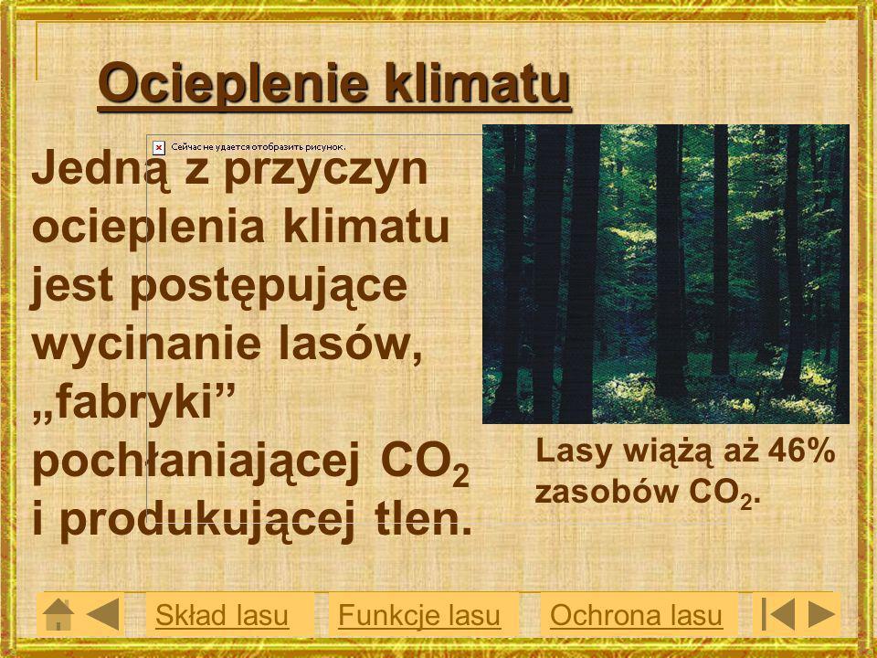 """Ocieplenie klimatu Jedną z przyczyn ocieplenia klimatu jest postępujące wycinanie lasów, """"fabryki pochłaniającej CO2 i produkującej tlen."""