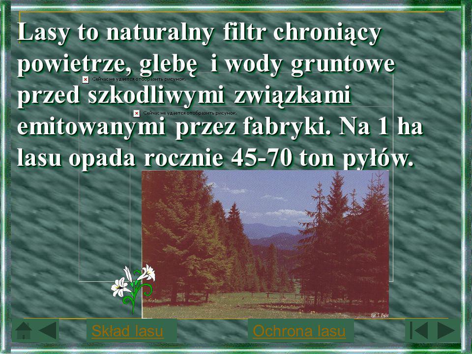 Lasy to naturalny filtr chroniący powietrze, glebę i wody gruntowe przed szkodliwymi związkami emitowanymi przez fabryki. Na 1 ha lasu opada rocznie 45-70 ton pyłów.