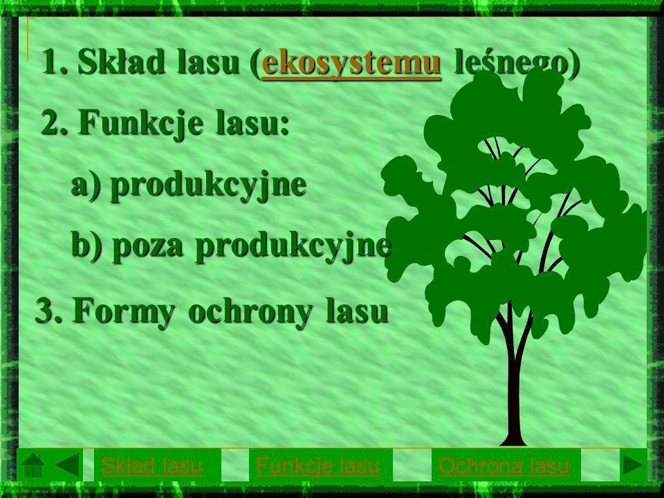 1. Skład lasu (ekosystemu leśnego)