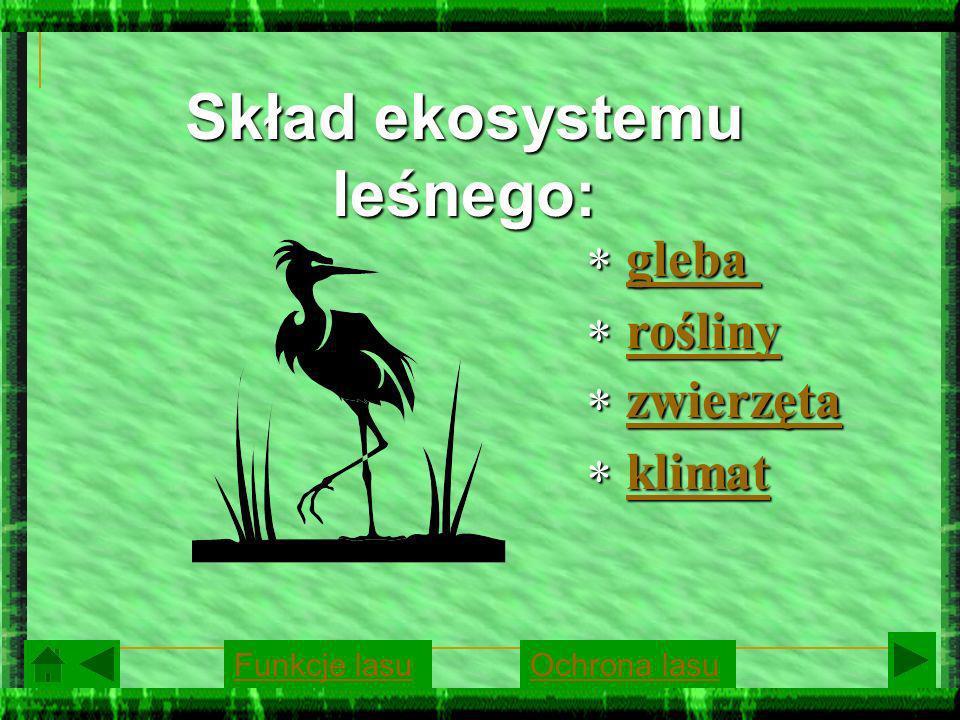 Skład ekosystemu leśnego: