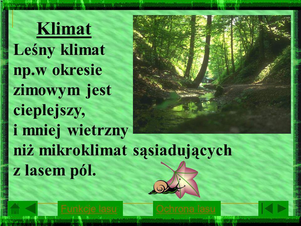 Klimat Leśny klimat np.w okresie zimowym jest cieplejszy, i mniej wietrzny niż mikroklimat sąsiadujących z lasem pól.