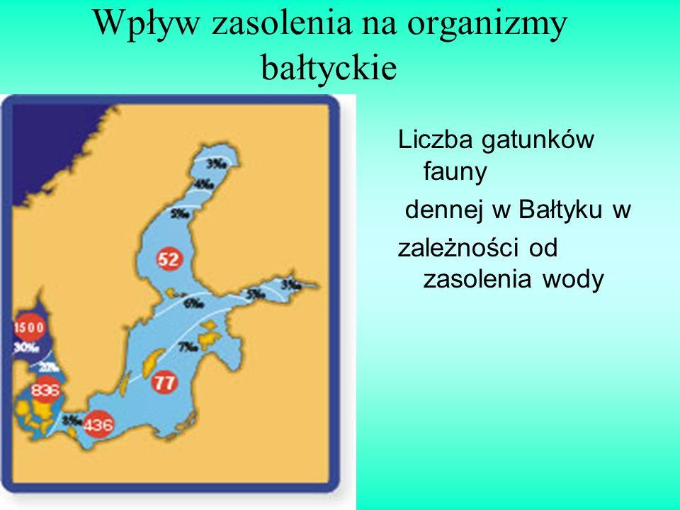 Wpływ zasolenia na organizmy bałtyckie