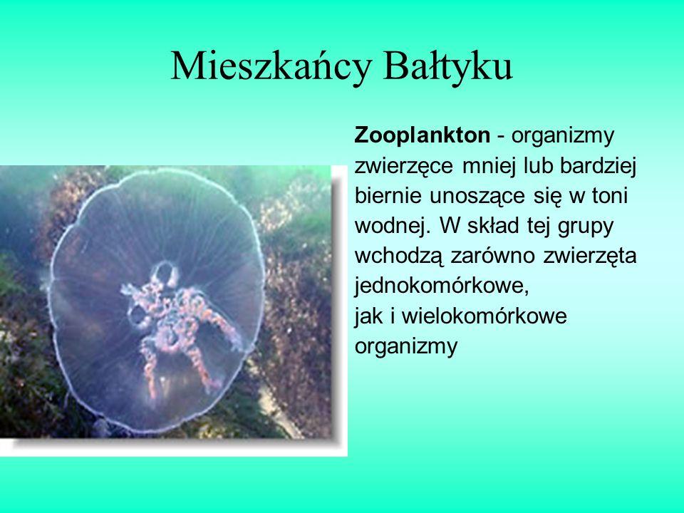 Mieszkańcy Bałtyku Zooplankton - organizmy