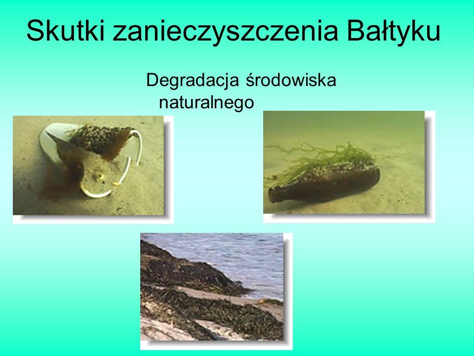 Skutki zanieczyszczenia Bałtyku