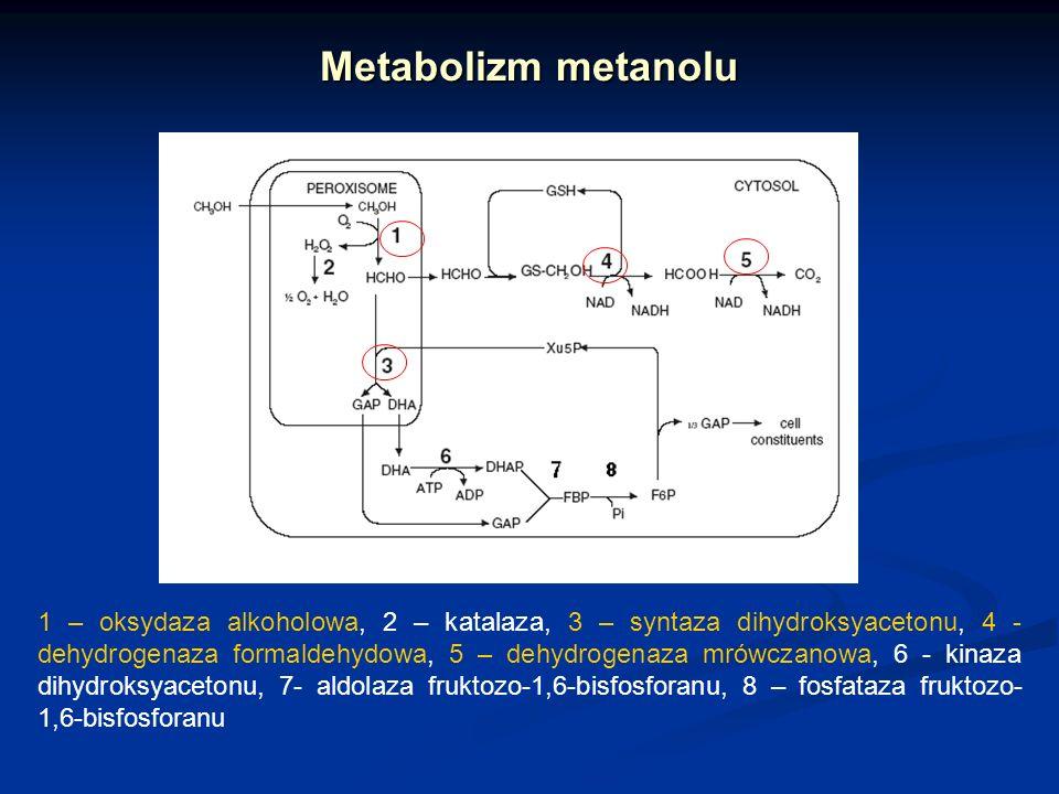 Metabolizm metanolu