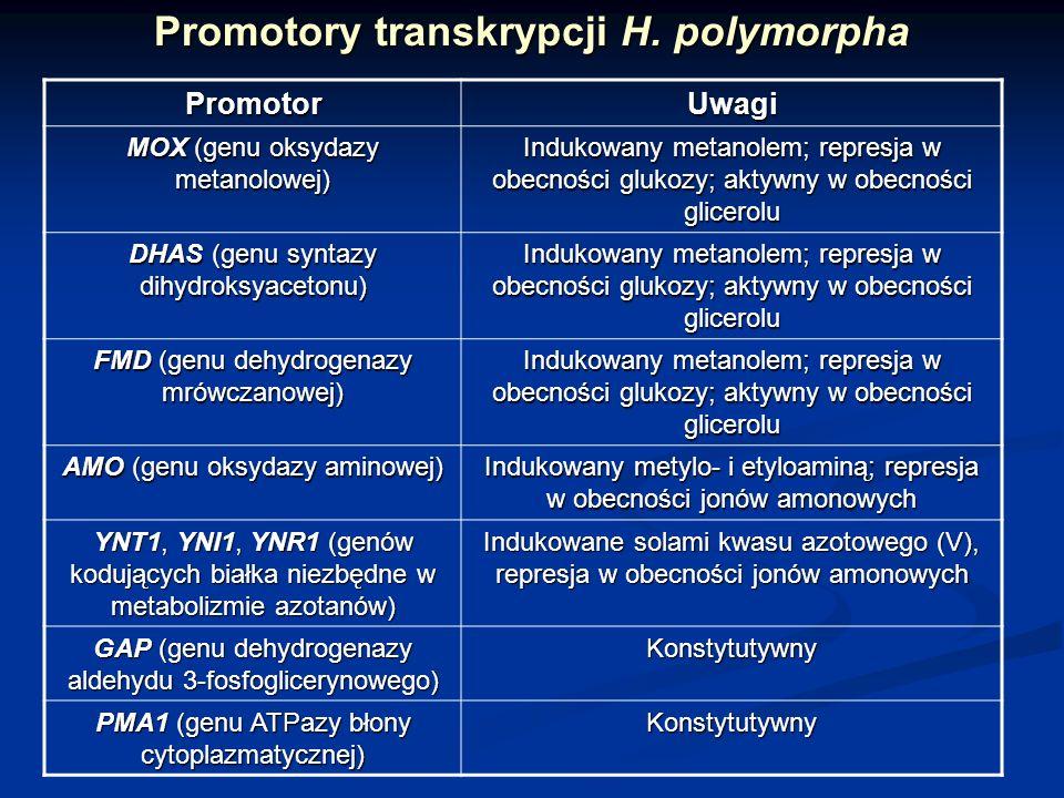 Promotory transkrypcji H. polymorpha