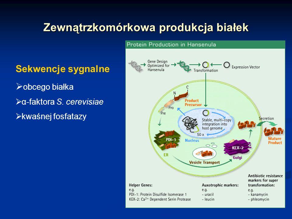 Zewnątrzkomórkowa produkcja białek